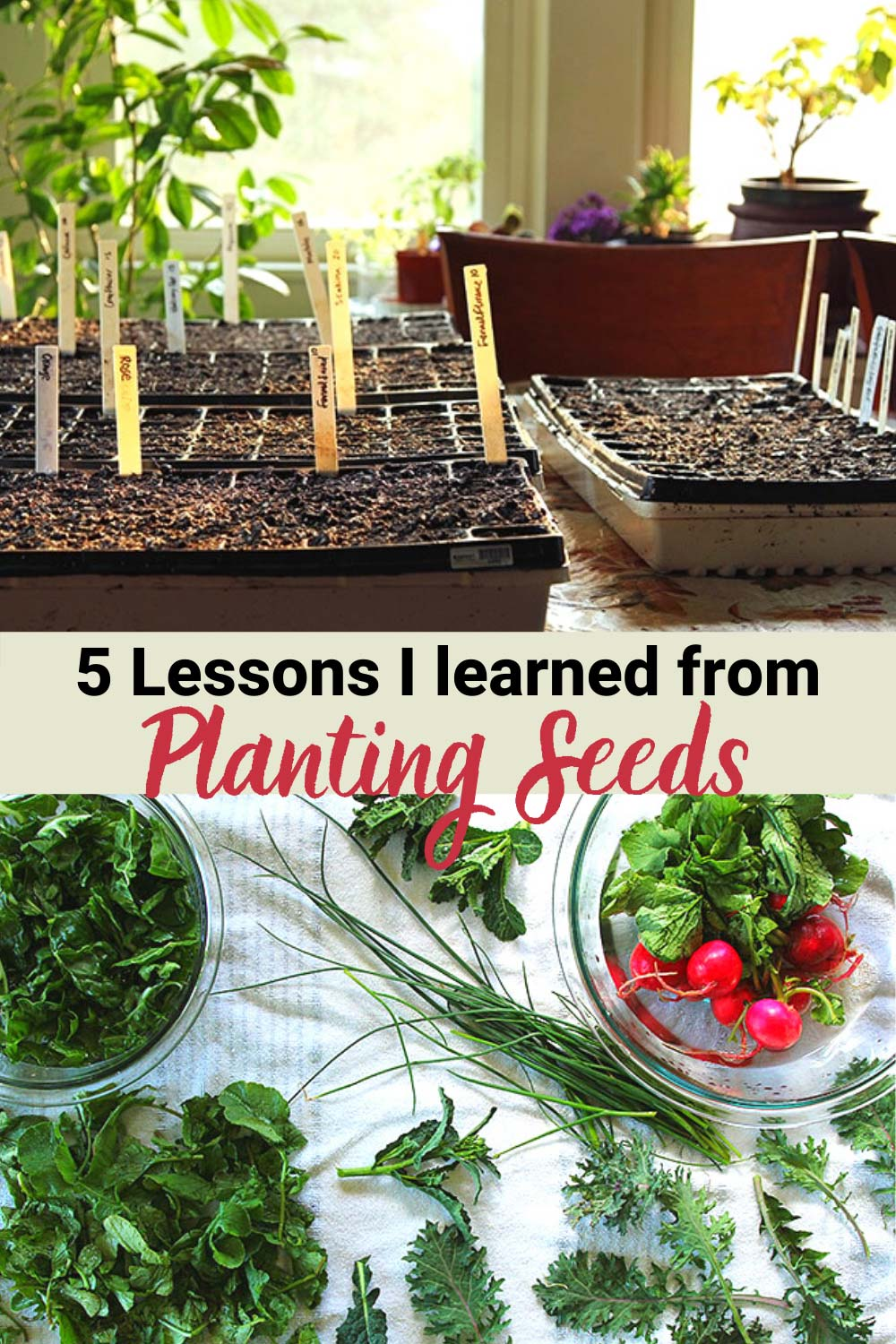 5 Lessons Planting Seeds Taught Me About Life
