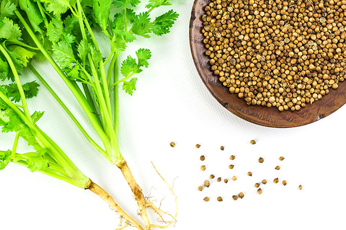 coriander seed and coriander leaf