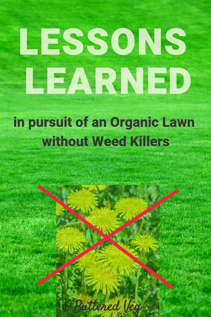 Lessons Learned In Pursuit Of An Organic Lawn Without Weed Killer